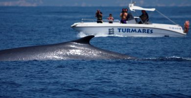 avistamiento de cetáceos en Tarifa