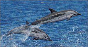 Avistamiento de delfines en Tarifa
