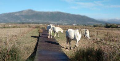 Ruta de senderismo en el Paraje Natural de Los Lances